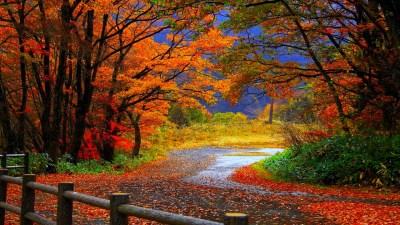 Free HD Fall Wallpapers make your screen shine brighter | PixelsTalk.Net