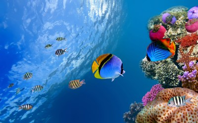 Underwater Wallpapers HD | PixelsTalk.Net