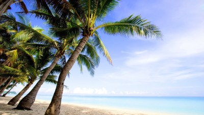 Desktop Palm Tree HD Wallpapers | PixelsTalk.Net