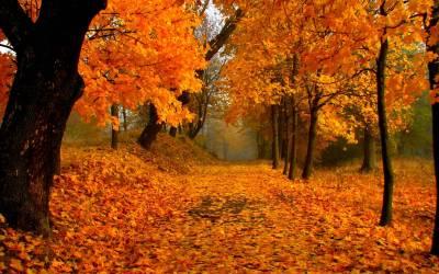 Fall Foliage Wallpapers HD | PixelsTalk.Net