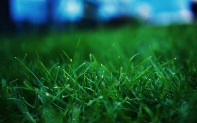 Grass Wallpapers HD | PixelsTalk.Net
