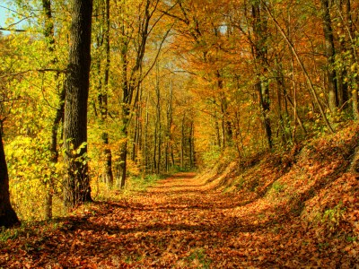 Fall Scenery Wallpapers Free Download | PixelsTalk.Net