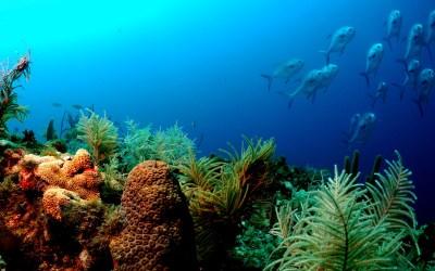 Ocean Underwater Wallpaper HD | PixelsTalk.Net