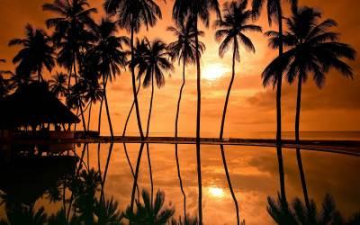 Palm Tree Wallpaper HD | PixelsTalk.Net