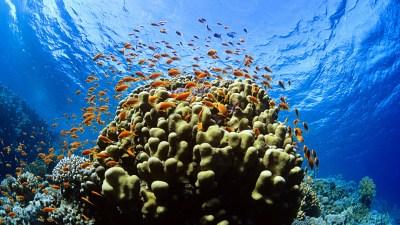 Underwater Wallpaper Download Free   PixelsTalk.Net