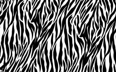Zebra Print Wallpaper HD   PixelsTalk.Net