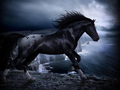 HD Black Horse Wallpapers | PixelsTalk.Net