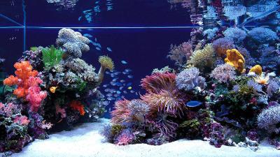 Aquarium HD Wallpapers | PixelsTalk.Net