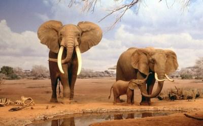 Elephant Wallpapers HD | PixelsTalk.Net