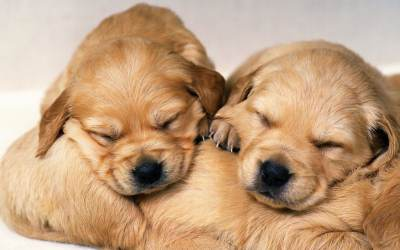 Free Download Cute Puppy Wallpapers | PixelsTalk.Net