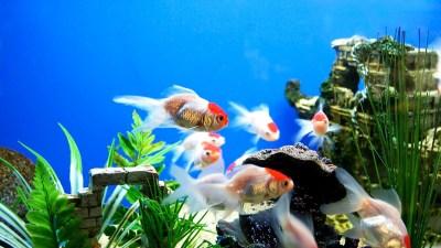 Aquarium Images HD | PixelsTalk.Net