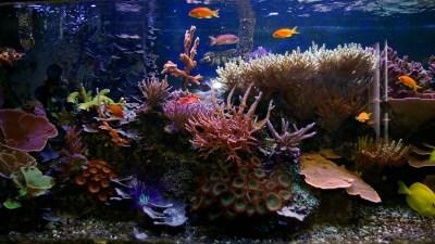 Free Download Aquarium Wallpapers | PixelsTalk.Net