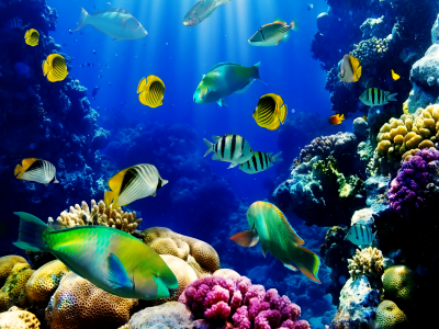 Aquarium HD Wallpapers | PixelsTalk.Net