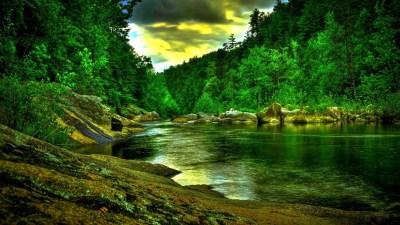 Forest Backgrounds HD Free Download   PixelsTalk.Net