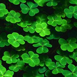 Four Leaf Clover Wallpapers Media File Pixelstalk Net