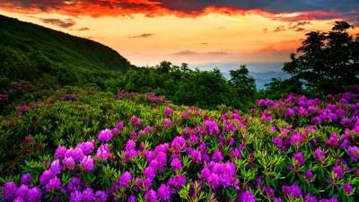 Full HD Nature Wallpapers Free Download   PixelsTalk.Net