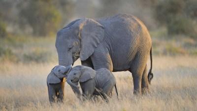 HD Baby Elephant Wallpaper | PixelsTalk.Net