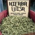 Cedrón o Hierba Luisa contra obesidad, jaqueca, celulitis, estrés, intoxicación, etc.