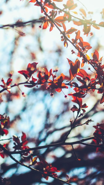 8 Free Autumn Inspired iPhone 7 Plus Wallpapers | Preppy ...