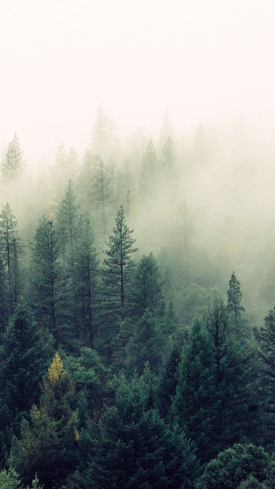 16 Adventurous Forest & Mountain iPhone 7 Wallpapers | Preppy Wallpapers