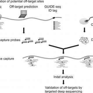 Genome-wide analysis of RNA-guided dCas9 binding in Neuro-2a cells. (A)... | Download Scientific ...
