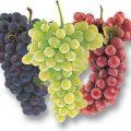 Cuidar los Intestinos con Uvas