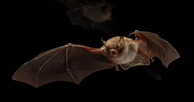 The world's first bat-friendly street lighting | Signify Company Website