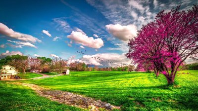 Landscape beautiful spring nature - HD wallpaper