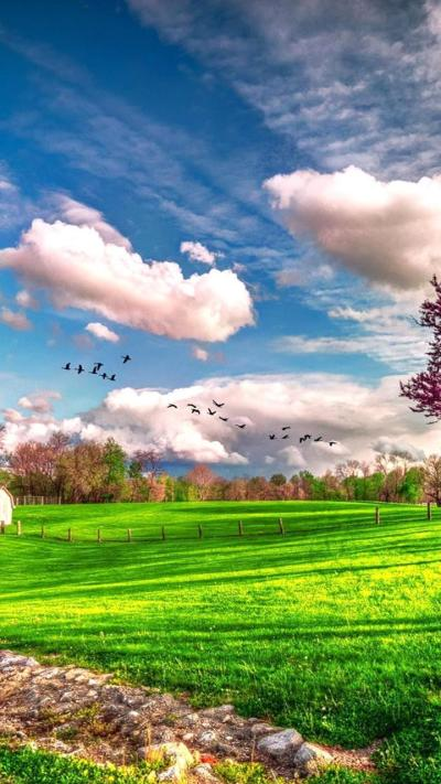 Landscape beautiful spring nature - HD wallpaper Wallpaper Download 720x1280