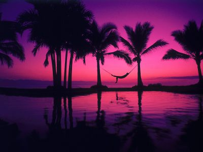 43 HD Purple Wallpaper/Background Images To Download For Free