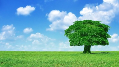 40 HD Tree Wallpapers/Backgrounds For Free Download