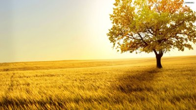 40 HD Tree Wallpapers/Backgrounds For Free Download