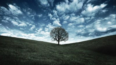40 HD Tree Wallpapers/Backgrounds For Free Download