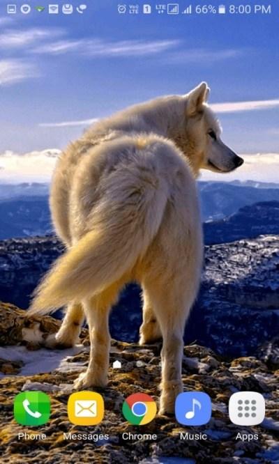 Mountain Wolf Live Wallpaper