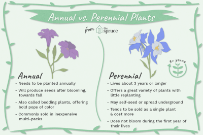 Annual Plants vs. Perennials