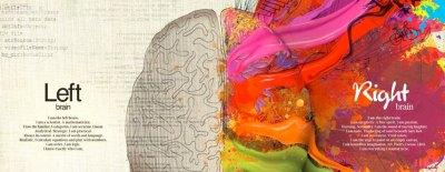 Curiosità, informazioni e salute del Cervello Umano