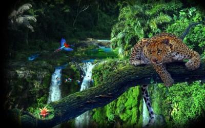 Amazon Jungle Tree Leopard Parrots Wallpaper Hd 3840x2400 : Wallpapers13.com