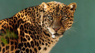 Jaguar Wallpaper Hd 3840x2400 : Wallpapers13.com