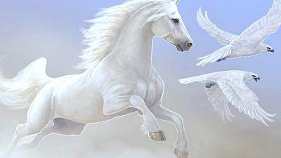 Nice White Horse Parrot Desktop Wallpapers Hd : Wallpapers13.com