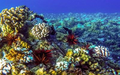 Ocean Seabed Reef Desktop Wallpaper Backgrounds Hd : Wallpapers13.com