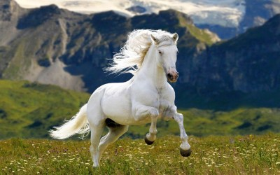 White Horse Meadow Grass Mountains Hd Wallpaper : Wallpapers13.com