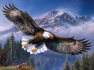 Beautiful Background Bald Eagle In Flight, Wings Spread Hd Wallpapers For Mobile Phones And ...