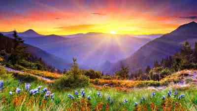 Awesome Sunset Sun Rays Forested Mountains, Beautiful Mountain Flowers With Green Grass Desktop ...