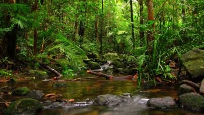 Nature Clear Mountain River Stones Fern Green Moss Green Vegetation Jungle Hd Wallpaper ...
