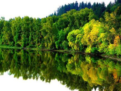 River In Autumn Coast Forest Trees Reflection In Water Landscape Ultra Hd 4k Wallpaper Hd ...