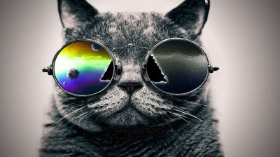 Download Cat With Sunglasses Wallpaper Gallery
