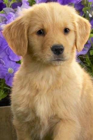Download Cute Puppy Live Wallpaper Gallery