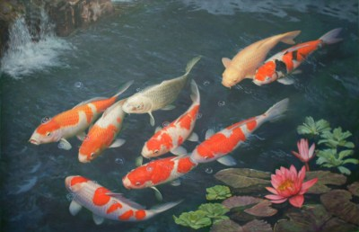 Download Koi Fish Live Wallpaper Full Version Free Download For Pc Gallery