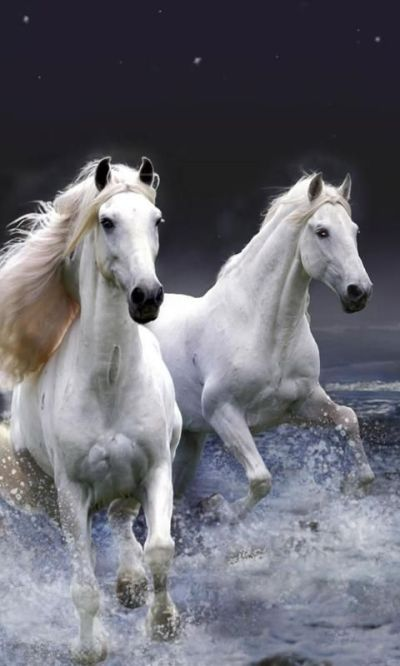 Download Live Horse Wallpaper Gallery