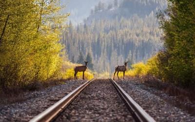 Deer timber railroad rails train h wallpaper | 1920x1200 | 195909 | WallpaperUP